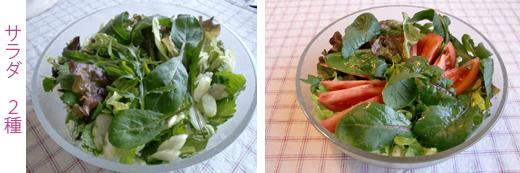 サラダ2種
