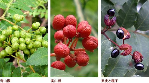 青山椒、実山椒、果皮と種子