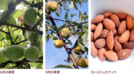 6月の果実、8月の果実、ローストしたナッツ