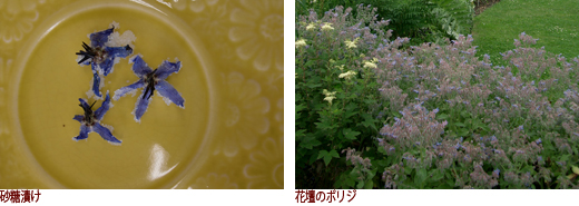 砂糖漬け、花壇のボリジ