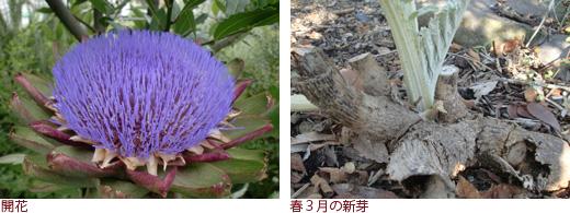 開花、春3月の新芽