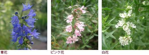 青花、ピンク花、白花