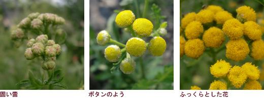 唇形の花、種子と花の構造