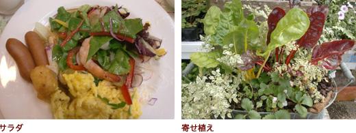 サラダ、寄せ植え