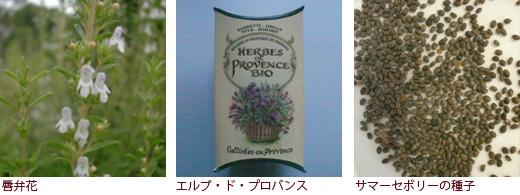 唇弁花、エルブ・ド・プロバンス、サマーセボリーの種子