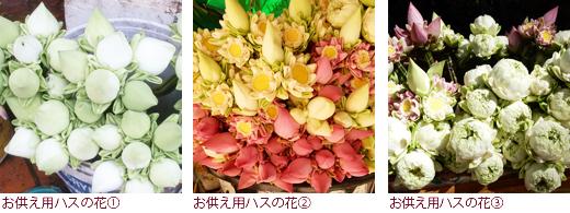お供え用ハスの花